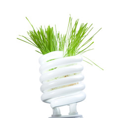 Green grass growing from lamp isolated on white