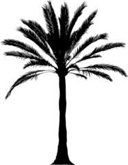 Detailed palm illustration