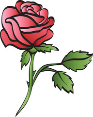 rose isolated on whte background
