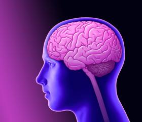 Denken und Gehirn