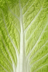 Cabbage sheet photographed close up