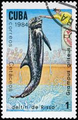 CUBA - CIRCA 1984 Grampus