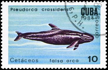 CUBA - CIRCA 1984 Pseudorca