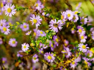 Bee on flowers in garden