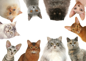 chats de race différentes réunis pour une composition