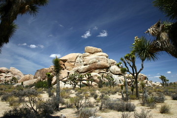 A view of Joshua Tree National Park