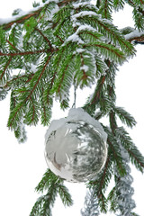 Christmas bauble on spruce branch with snow