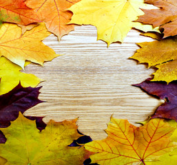 beautiful frame from the autumnal leaves
