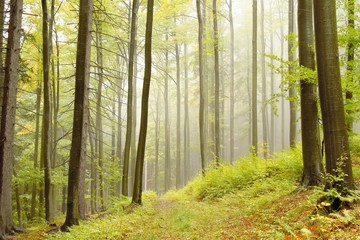 Keuken foto achterwand Bos in mist Lane running through autumn woods on a foggy morning