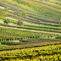 Wall Murals Vineyard vineyards in Cejkovice region, Czech Republic