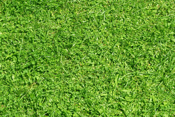 High resolution green grass