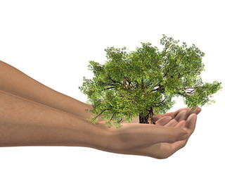 High resolution conceptual green tree held in hands