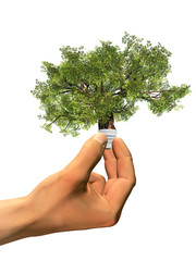 High resolution conceptual green tree as a lamp held in hand