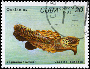 CUBA - CIRCA 1983 Loggerhead Turtle