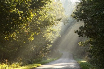 Rural road through the misty autumn forest at sunrise