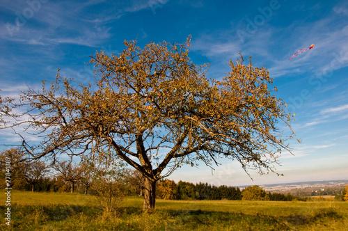 apfelbaum im herbst stockfotos und lizenzfreie bilder auf bild 27841887. Black Bedroom Furniture Sets. Home Design Ideas