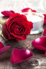 Rose und Blütenblätter