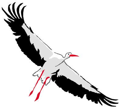 Oiseaux - Cigogne en vol