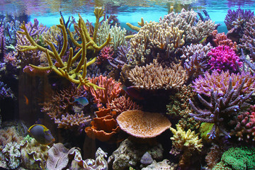 Door stickers Under water corals