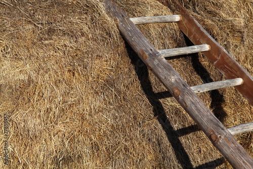 Scaletta In Legno Antica : Antiche scale a pioli in legno annunci torino