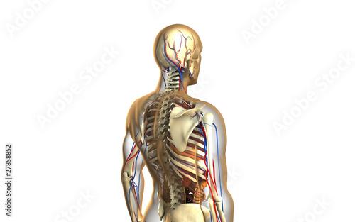 Menschliche Anatomie\
