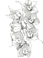 picture orchid,monochrome image