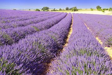 Printed roller blinds Lavender lavande de Provence