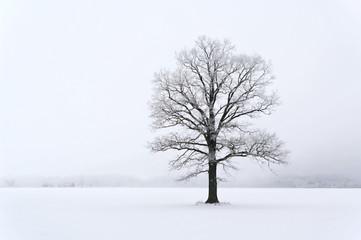 Tree on the land.