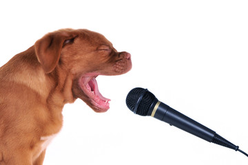 Singing Puppy Close-Up