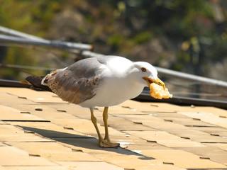 gabbiano mangia la focaccia