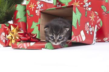 tenerissimo gattino come regalo