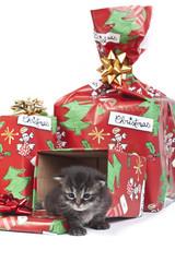 simpatico gattino che esce dal regalo