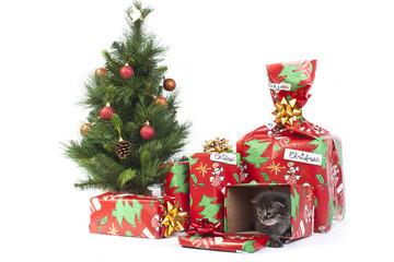 idee regalo natalizio