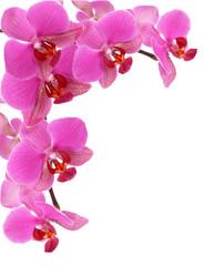 Tuinposter Orchidee blumenhintergrund,orchidee