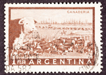 Argentinean Postage Stamp Heard of Beef Cattle Argentina Pampas