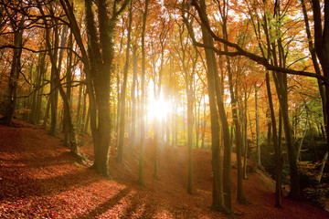 Sun shining through an autumn forest.