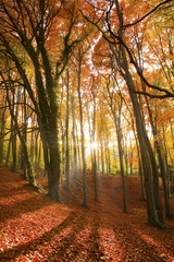 Sun beams through an autumn forest.