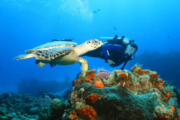 Photo sur Plexiglas Plongée Hawksbill Turtle and Diver