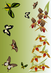 orchid flowers and butterflies design