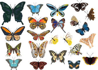 twenty two color butterflies