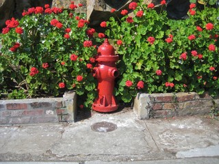 Red fire hydrant against a bed of red geraniums on Alcatraz