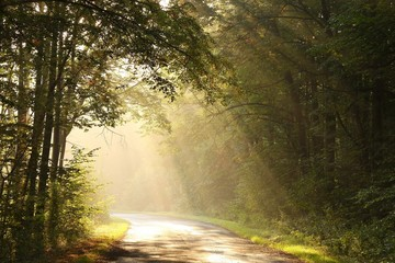 Rural road through the misty autumn forest at dawn