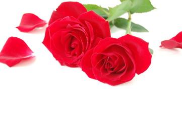 赤いバラと花びら