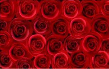 Beautiful roses. Photo-realistic vector.