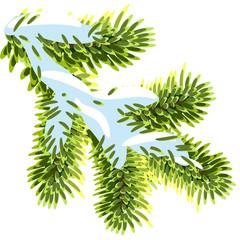 Fir branches under the snow