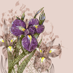 vector background with  blooming irises and plants