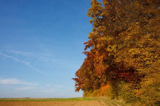 Herbstwald #5