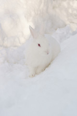 white bunny rabbit in the snow