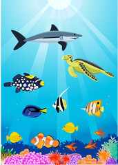 Aluminium Prints Submarine beautiful sealife