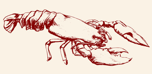lobster sketch